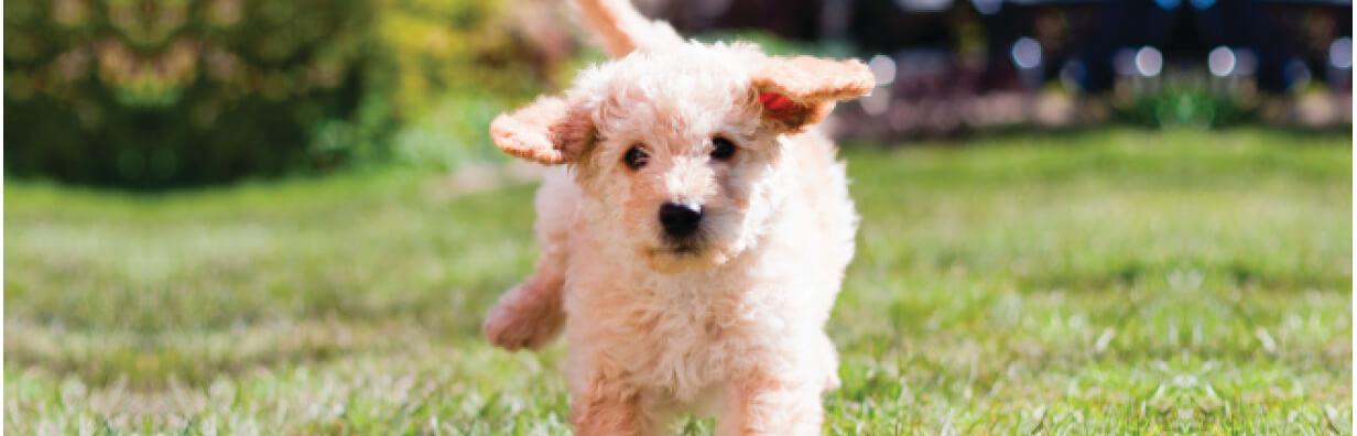Pup Header pg1