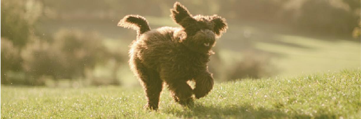 Pup Header pg2