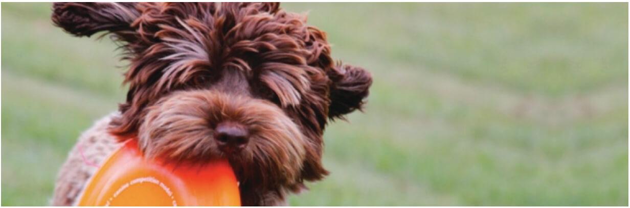Pup Header pg3