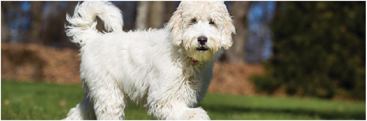 Pup Header pg4