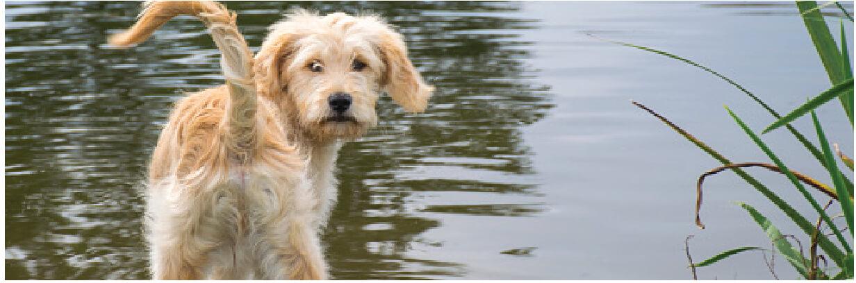 Pup Header pg5