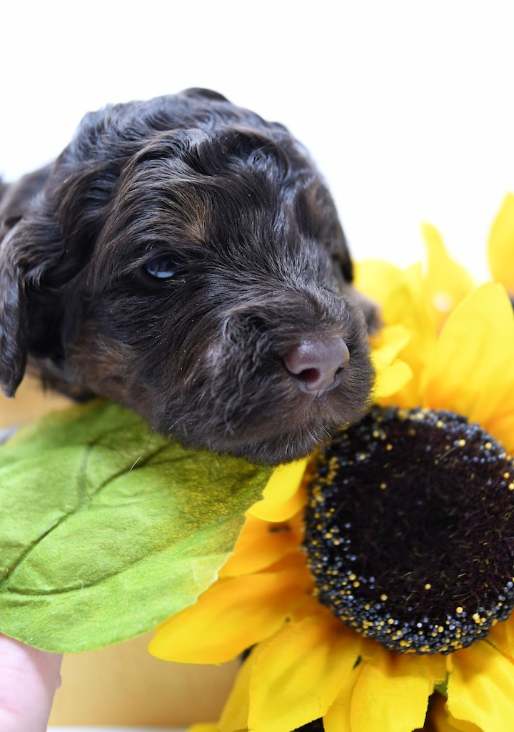 Stormy-x-Lincoln-3-wks-101