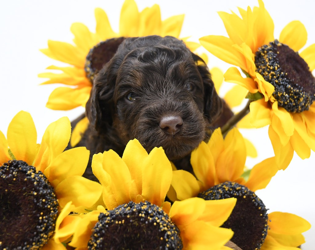 Stormy-x-Lincoln-3-wks-103