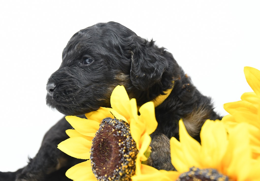 Stormy-x-Lincoln-3-wks-11