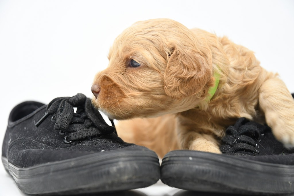Stormy-x-Lincoln-3-wks-114