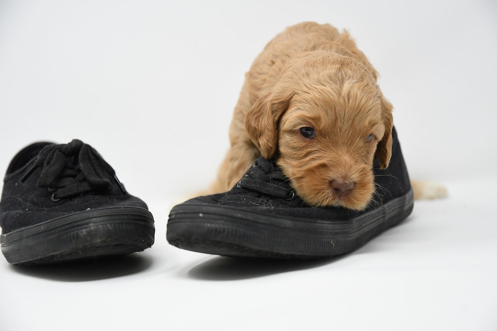Stormy-x-Lincoln-3-wks-115