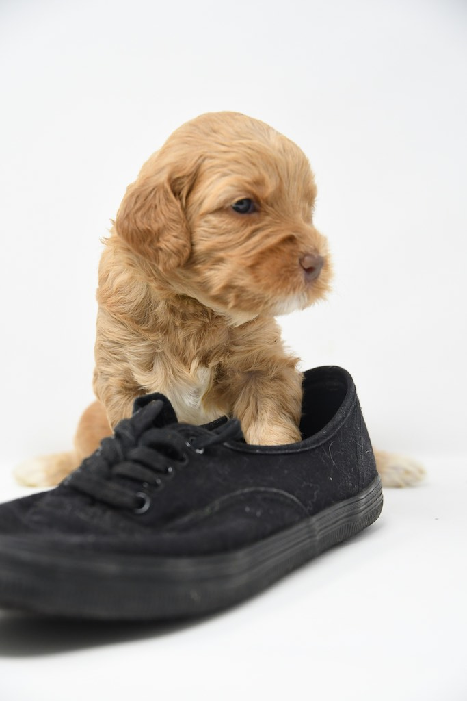 Stormy-x-Lincoln-3-wks-116