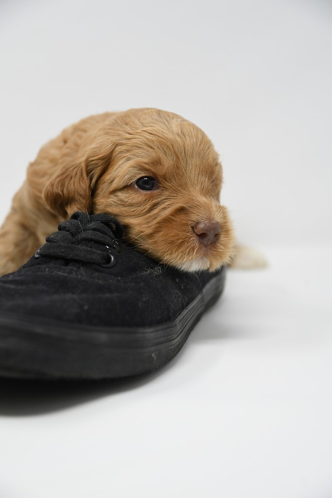 Stormy-x-Lincoln-3-wks-117