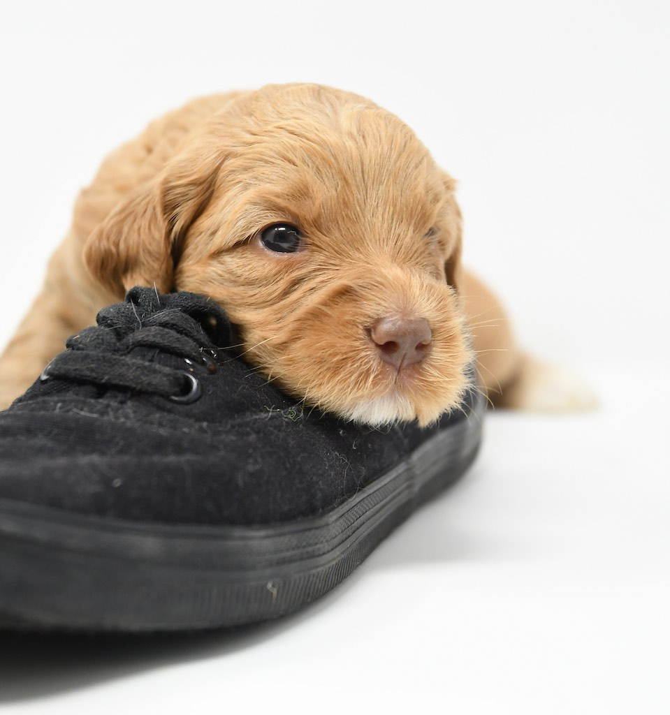 Stormy-x-Lincoln-3-wks-118