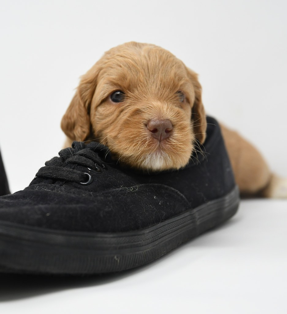 Stormy-x-Lincoln-3-wks-119
