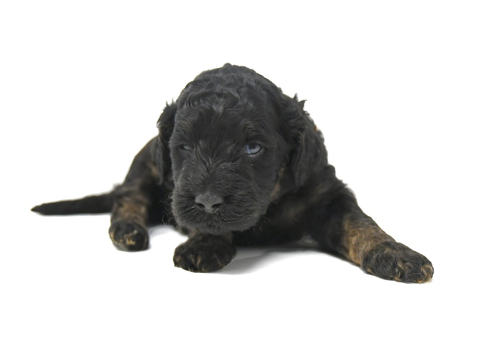 Stormy-x-Lincoln-3-wks-12