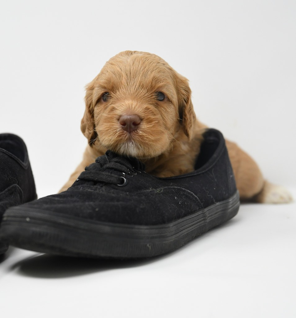 Stormy-x-Lincoln-3-wks-120