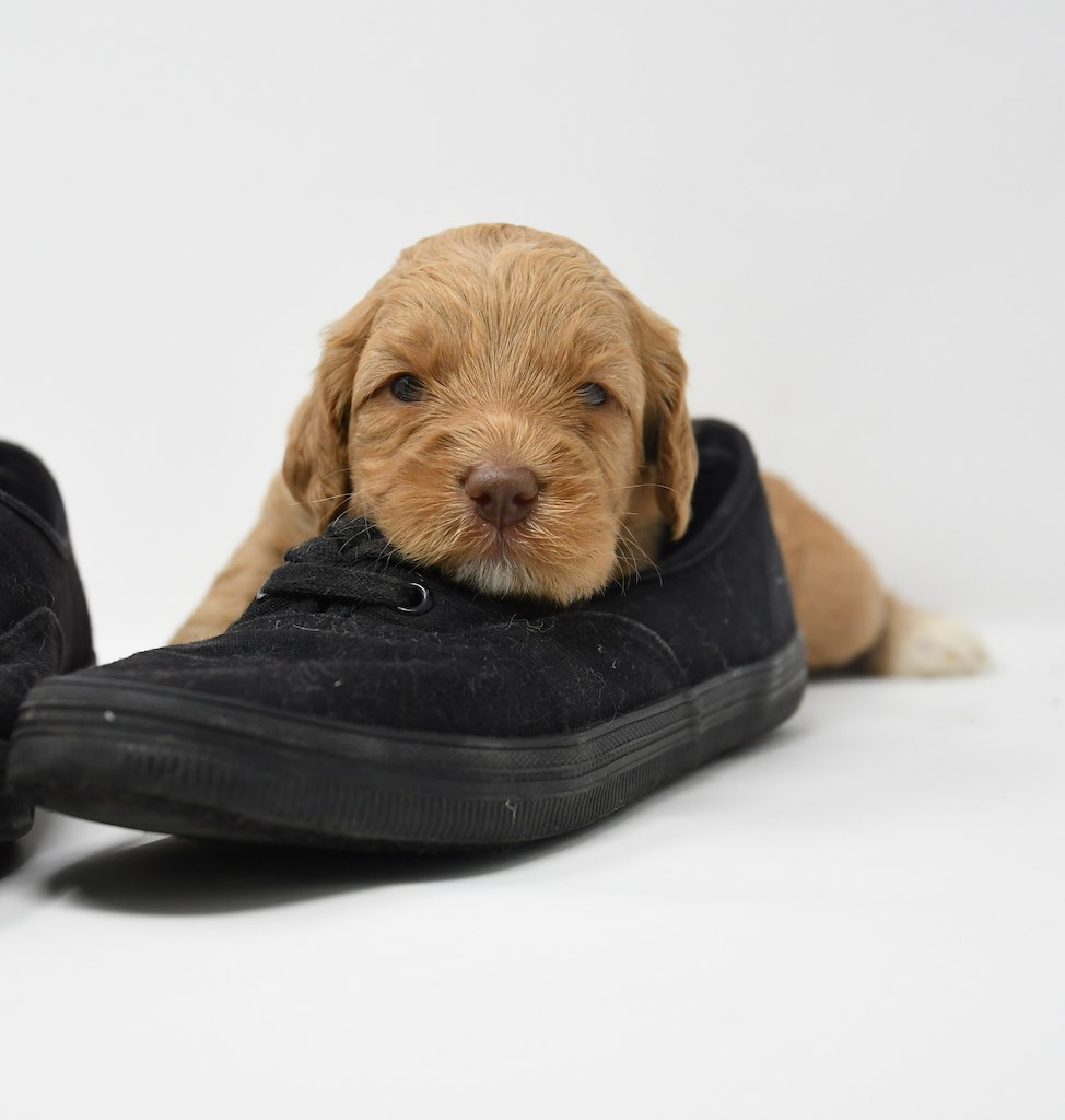 Stormy-x-Lincoln-3-wks-122
