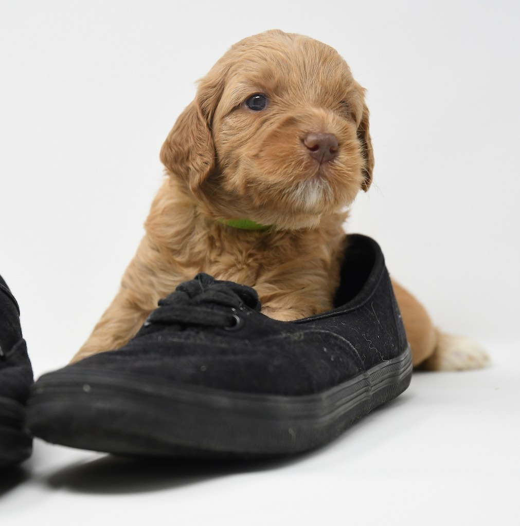 Stormy-x-Lincoln-3-wks-123