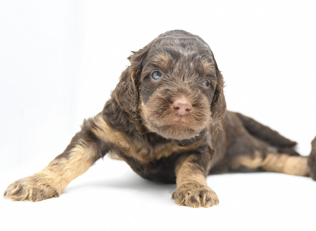 Stormy-x-Lincoln-3-wks-14