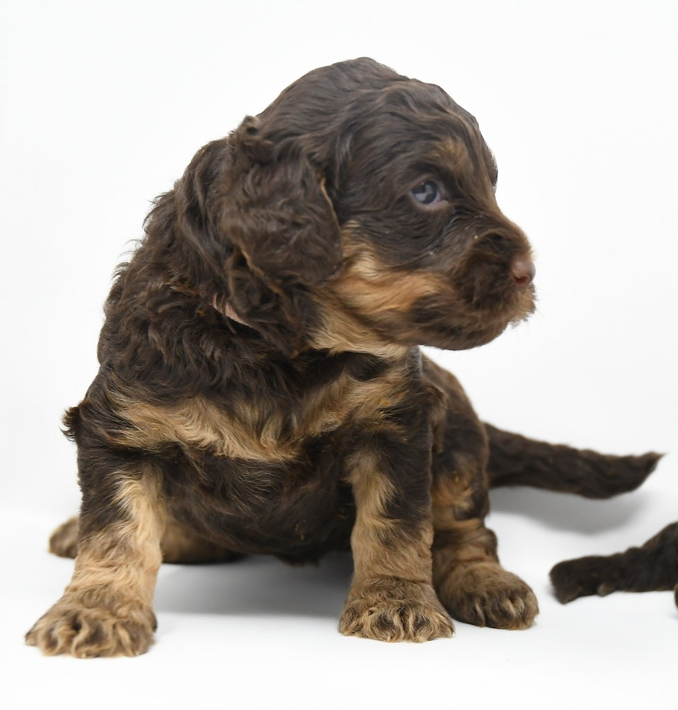 Stormy-x-Lincoln-3-wks-15