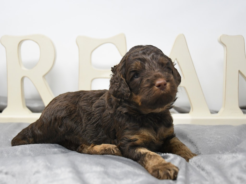 Stormy-x-Lincoln-3-wks-2