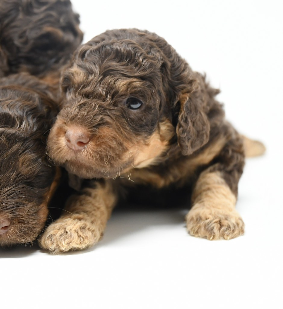 Stormy-x-Lincoln-3-wks-24