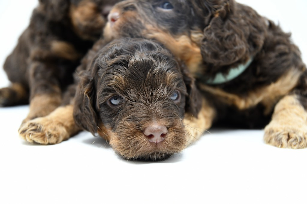 Stormy-x-Lincoln-3-wks-26