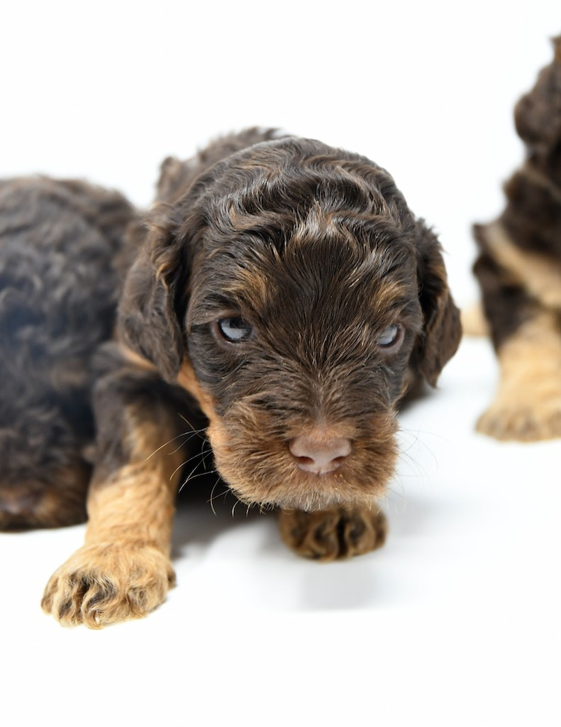 Stormy-x-Lincoln-3-wks-30