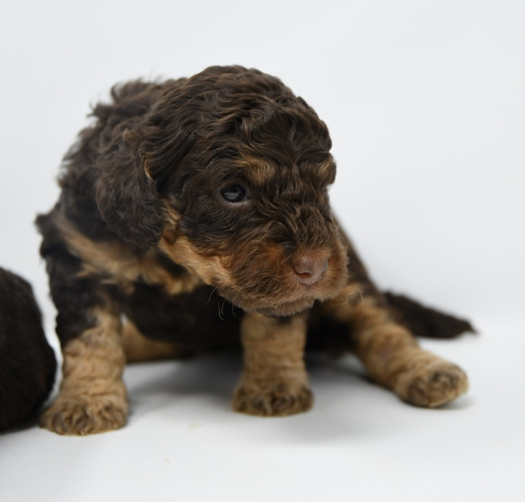 Stormy-x-Lincoln-3-wks-31