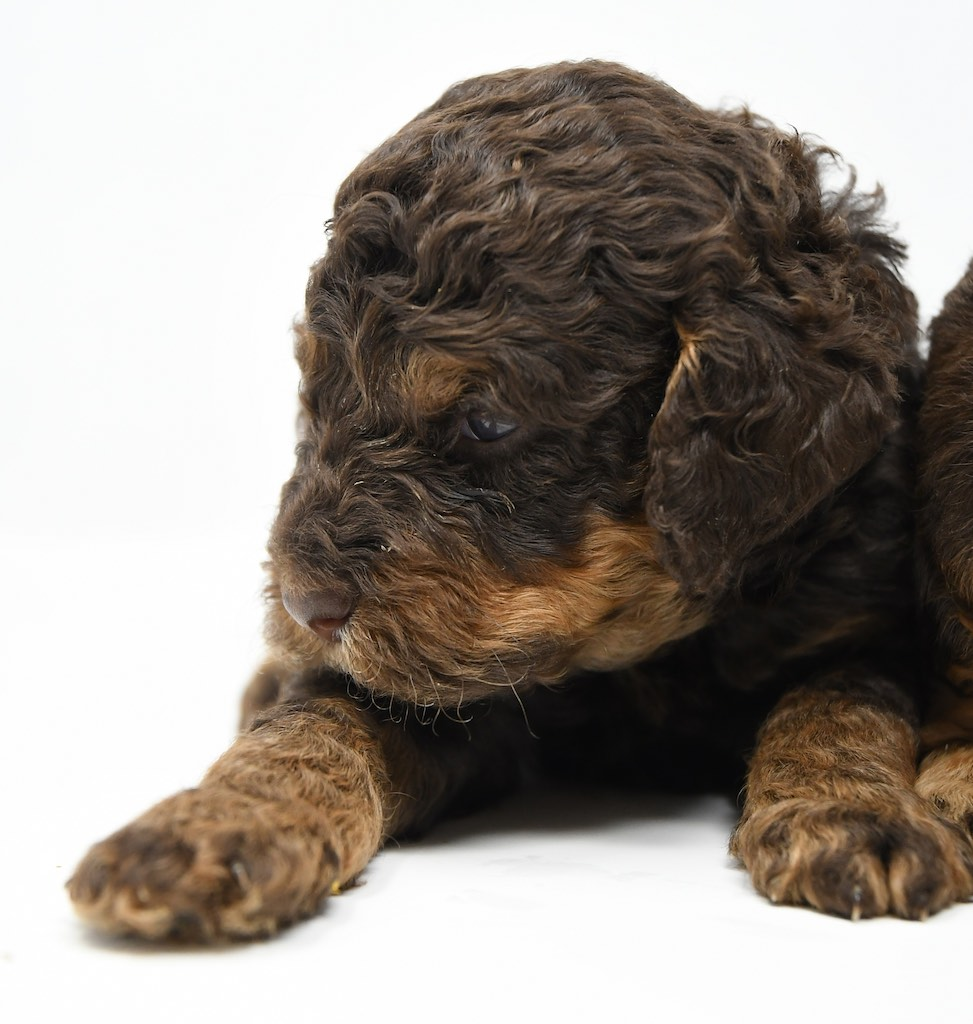 Stormy-x-Lincoln-3-wks-32