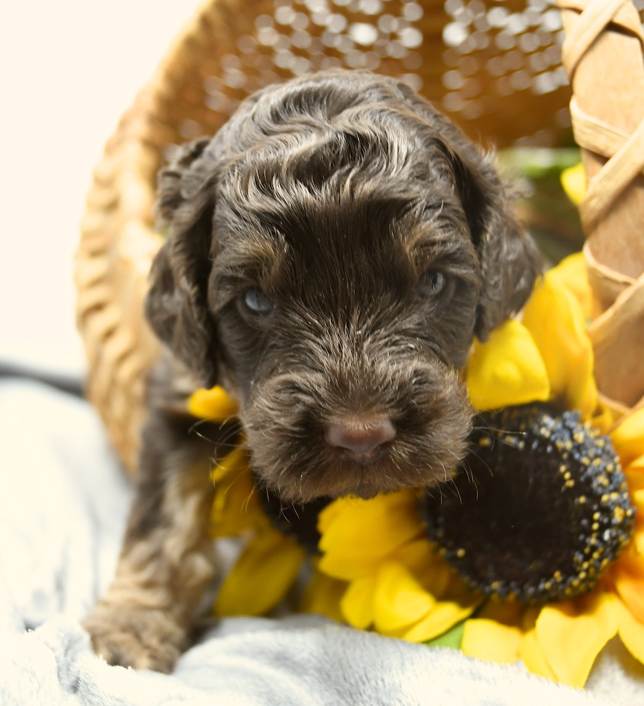 Stormy-x-Lincoln-3-wks-7