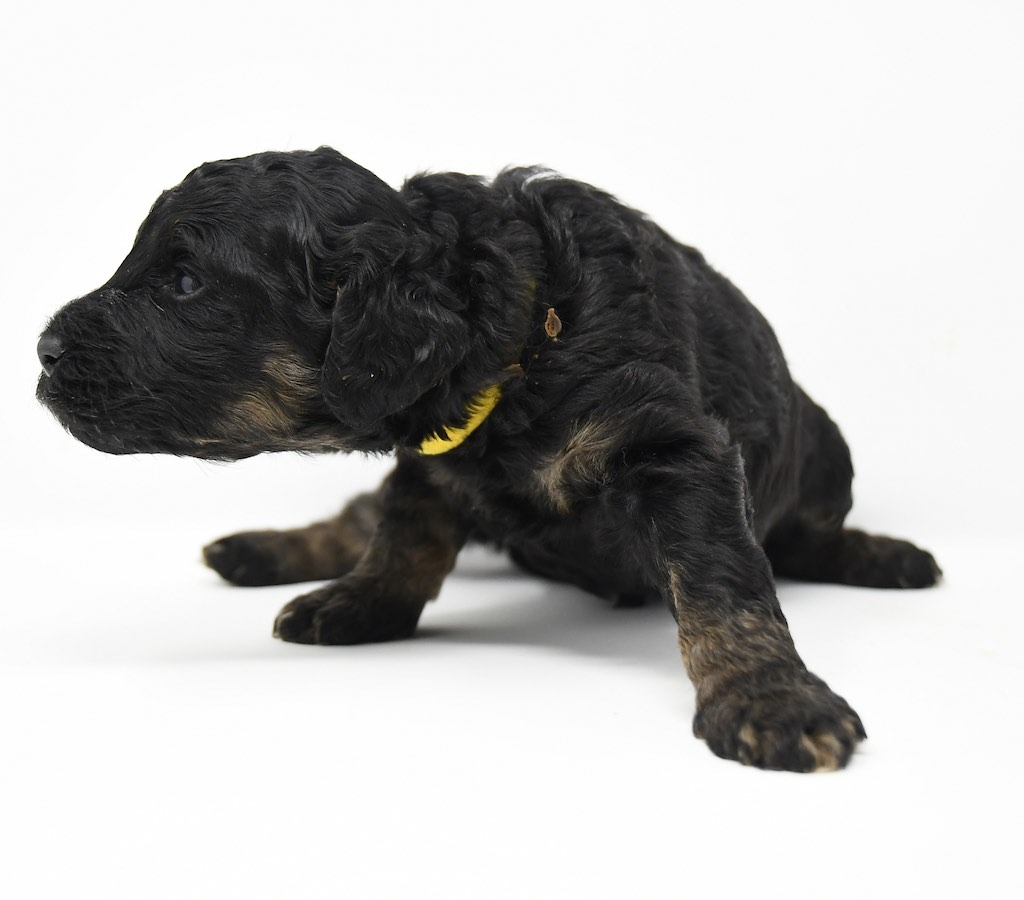 Stormy-x-Lincoln-3-wks-8