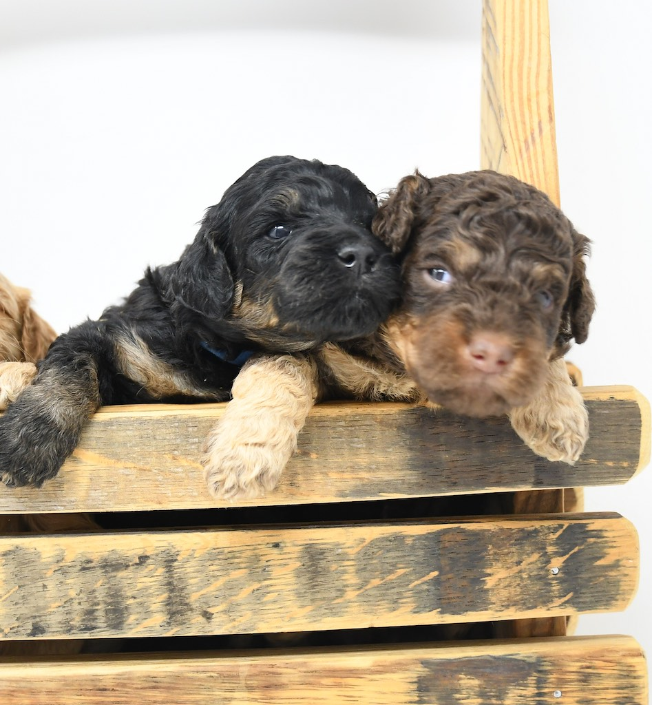 Stormy-x-Lincoln-3-wks-84