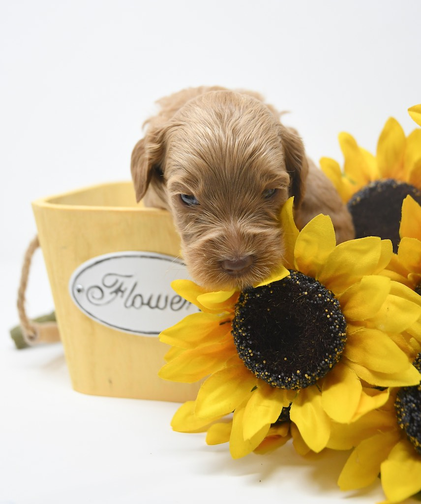 Stormy-x-Lincoln-3-wks-98